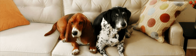 Property Staging Mistakes Pet Smells and Mess
